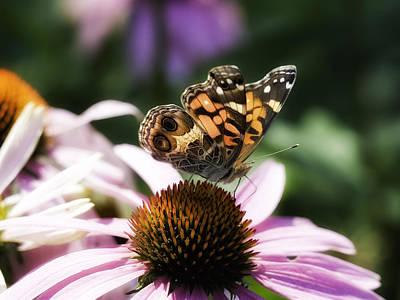 Photograph - Summer Beauty by Gary Shepard
