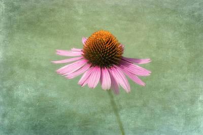 Photograph - Summer Beauty by Kim Hojnacki