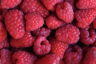 Photograph - Summer Berries - 365-166 by Inge Riis McDonald