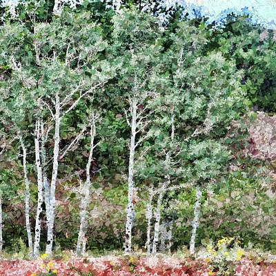 Photograph - Summer Birch Trees by John Freidenberg