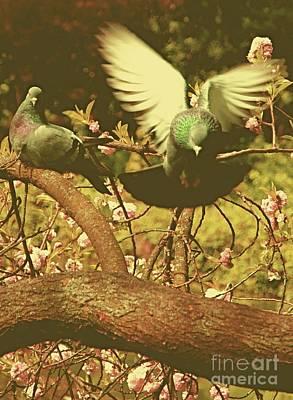 Photograph - Summer Birds by Louise Fahy