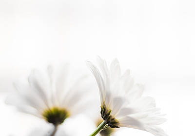 Gerber Daisy Photograph - Summer Bliss Horizontal by Shelby  Young