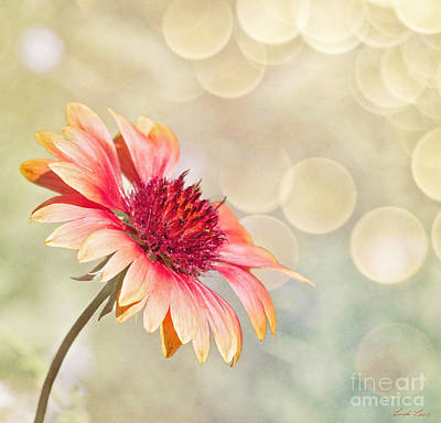 Gaillardia Photograph - Summer Bliss by Linda Lees