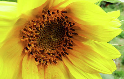 Photograph - Summer Bloom by Cathy Harper