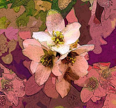 Photograph - Summer Blossom by David Pantuso
