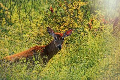 Photograph - Summer Breeze Deer by Judy Vincent
