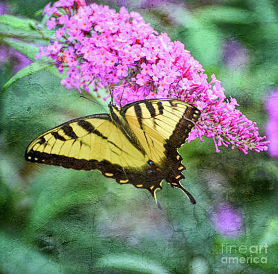 Photograph - Summer Breeze - Eastern Tiger Swallowtail Butterfly by Kerri Farley