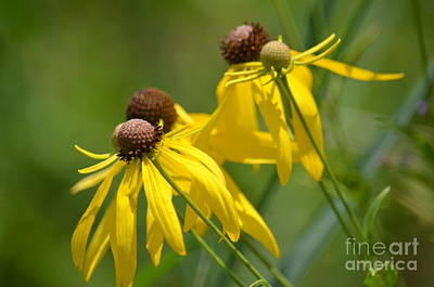 Photograph - Summer Breeze by Maria Urso
