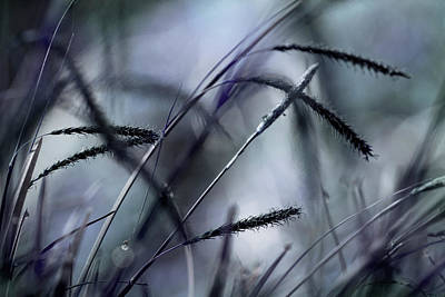 Photograph - Summer Breeze by Mike Eingle
