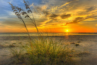 Oats Photograph - Summer Breezes by Marvin Spates