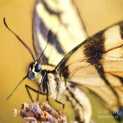Blue Swallowtail Photograph - Summer Butterfly by Darren Fisher