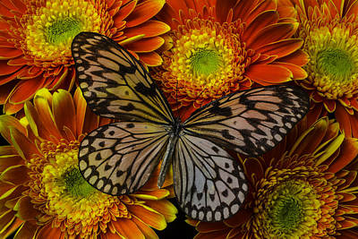 Gerbera Photograph - Summer Butterfly by Garry Gay