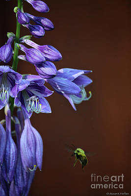 Photograph - Summer Buzz by Susan Herber