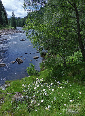 Photograph - Summer By The River Dee by Phil Banks