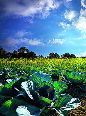 Cabbage Photograph - Summer Cabbage by Phil Koch