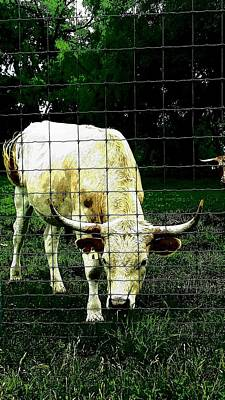 Photograph - Summer Cattle by Marisela Mungia