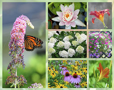 Photograph - Summer Collage by Geraldine Alexander