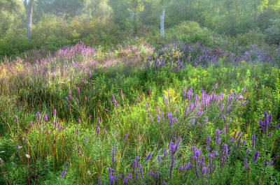Photograph - Summer Color 2017 by Bill Wakeley