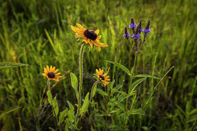 Photograph - Summer Color by Scott Bean
