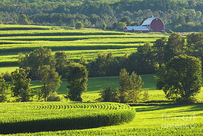 Photograph - Summer Cornfield Landscape by Alan L Graham