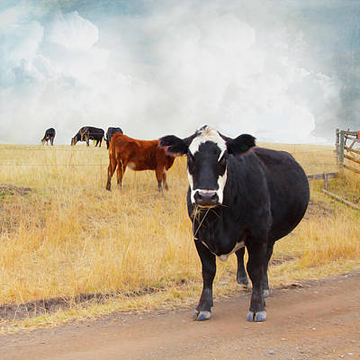 Photograph - Summer Cows by Theresa Tahara