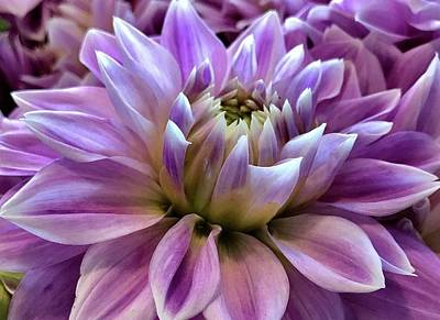 Photograph - Summer Dahlia by Bruce Bley