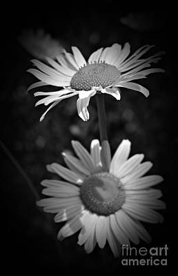 Photograph - Summer Daisies Monochrome by Chalet Roome-Rigdon