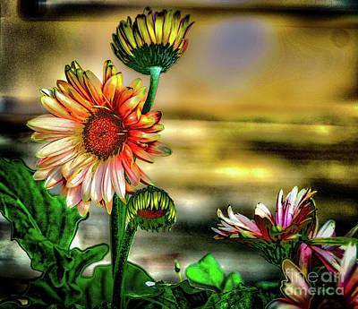 Photograph - Summer Daisy by William Norton