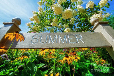 Photograph - Summer by David Arment