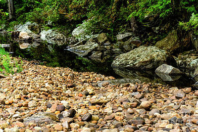Photograph - Summer Day Williams River  by Thomas R Fletcher