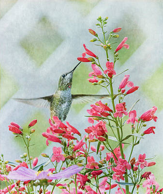 Photograph - Summer Delight by Angie Vogel