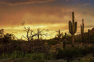 Photograph - Summer Desert Skies  by Saija Lehtonen