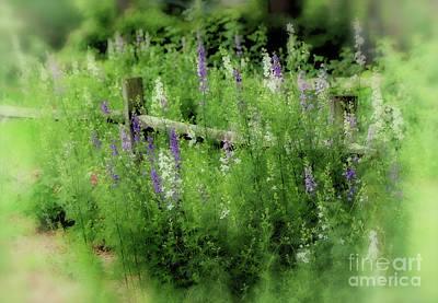 Split Rail Fence Photograph - Summer Dream by Karen Adams