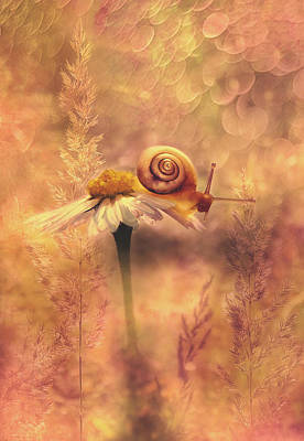 Surreal Digital Art Mixed Media - Summer Dream by Pixabay