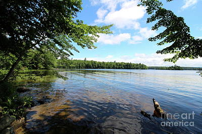 Photograph - Summer Dreaming On Lake Umbagog  by Neal Eslinger