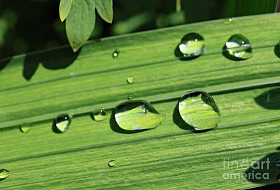 Photograph - Summer Droplets by Mary Haber