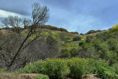 Photograph - Summer Drought And Spring Bloom by Michael Gordon
