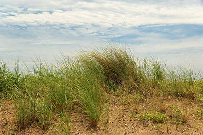 Photograph - Summer Dune by Cate Franklyn