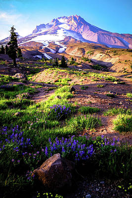 Photograph - Summer Evening At Mt Hood by Athena Mckinzie