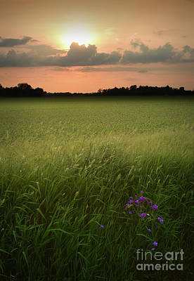 Photograph - Summer Evening by Charles Owens