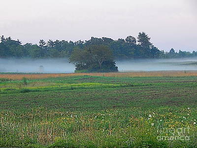 Photograph - Summer Evening Fog by Expressionistart studio Priscilla Batzell