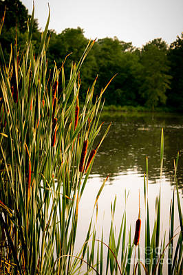 Summer Evening On The Pond Art Print by Jim Raines