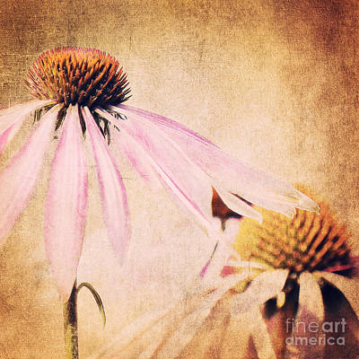 Summer Feeling Art Print by Angela Doelling AD DESIGN Photo and PhotoArt
