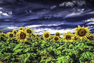 Photograph - Summer Field Of Sunflowers by Vic Bouchard