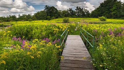 Photograph - Summer Field Of Wildflowers by Bill Wakeley
