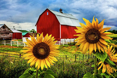Photograph - Summer Fields At The Red Barn by Debra and Dave Vanderlaan