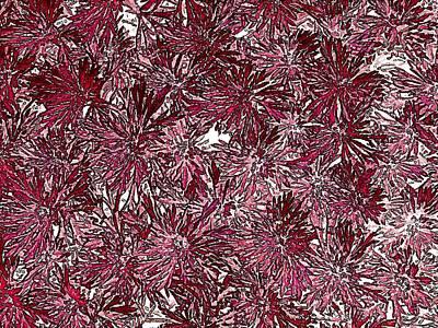 Digital Art - Summer Floral Abstract by Doug Morgan