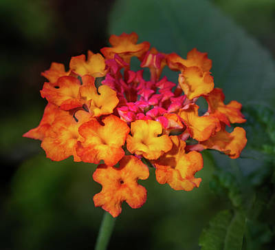 Photograph - Summer Floral Colors by James Woody