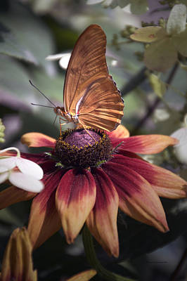 Invertebrates Mixed Media - Summer Floral With Butterfly 03 Vertical by Thomas Woolworth