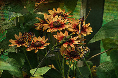 Photograph - Summer Floral With Monarch Butterflies Pa 01 by Thomas Woolworth